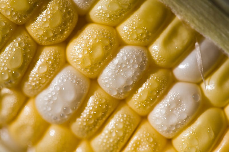 how to cook corn out of a can