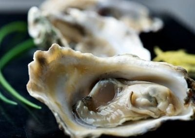 fresh oysters for recipes