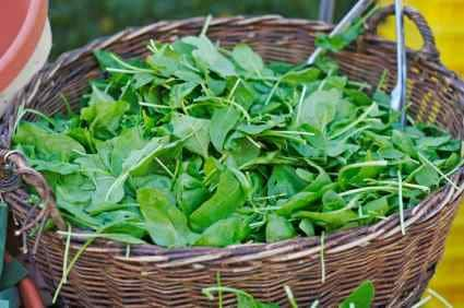 freshly picked spinach